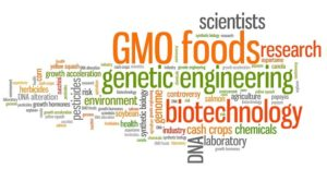 GMO good or bad myths explanations