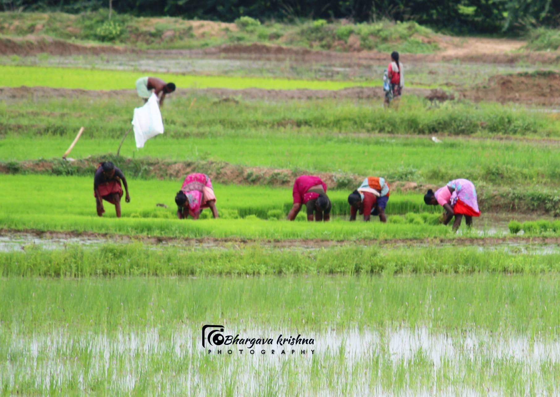 Farmers day income Women farmers suffering Agriculture India