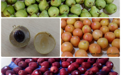 Eight exotic fruits of India that you should know before eating