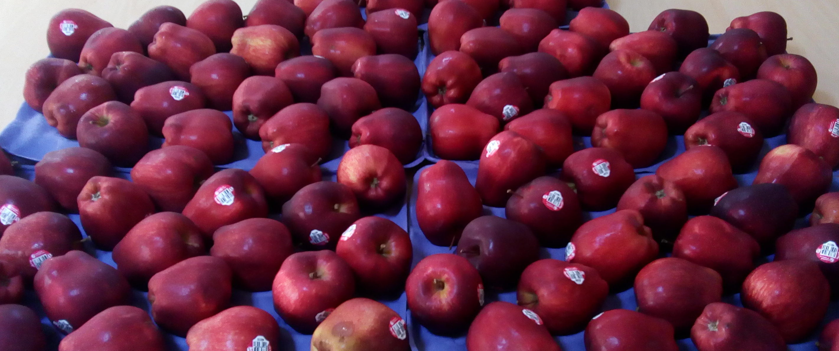 Red Delicious Apples exotic fruits