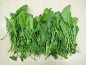 Indian spinach - Spinacia oleracea