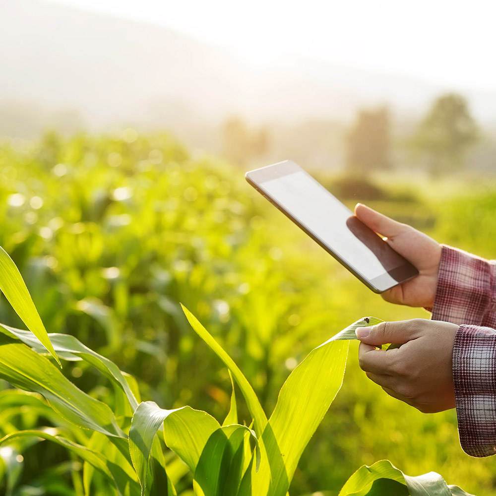 Nano biosensors application in Agriculture