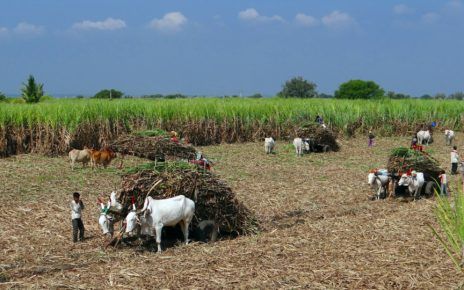 How to overcome sugarcane production issues in India